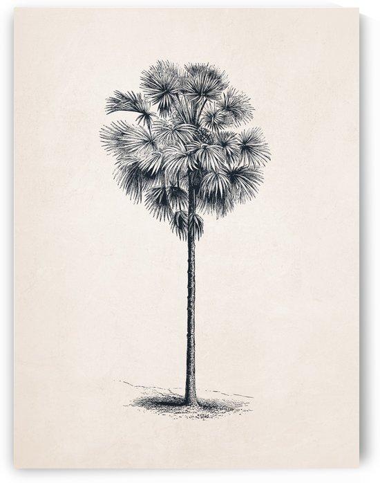 Tree Sketch 03 by Apolo Prints