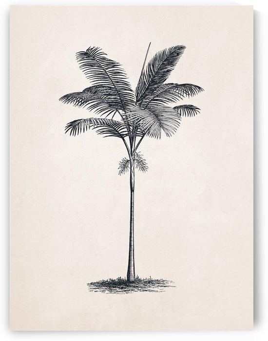 Tree Sketch 02 by Apolo Prints