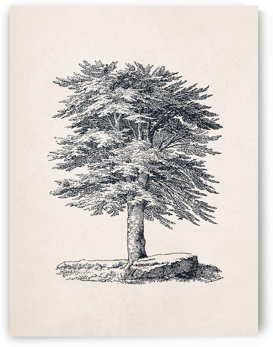 Tree Sketch 06 by Apolo Prints