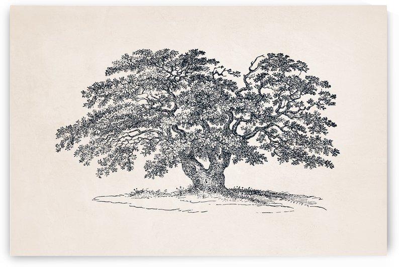 Tree Sketch 52 by Apolo Prints