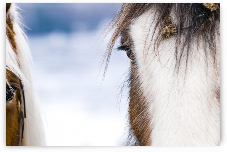 Horse eye by Marie-Andree Blais