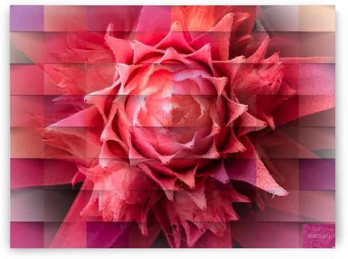 Textural Bromeliad by BotanicalArt ca