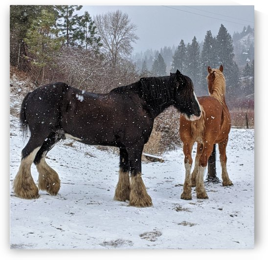 Horses in the Snow by Gui Barret