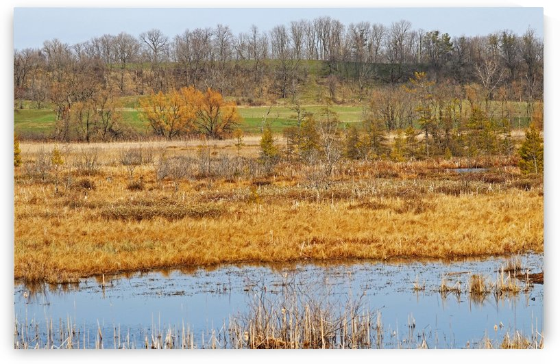 Grass Lake In Gold by Deb Oppermann