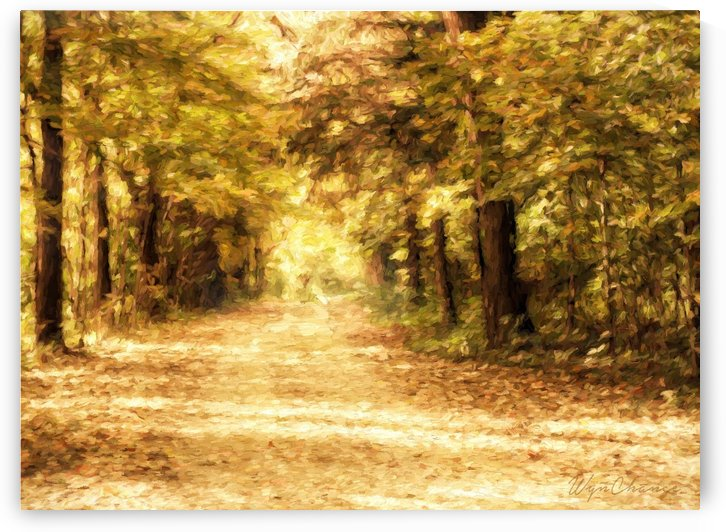 Autumn Path 2 by A WYN CHANCE