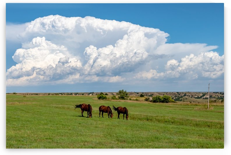 Grazing Before The Storm by Garald Horst