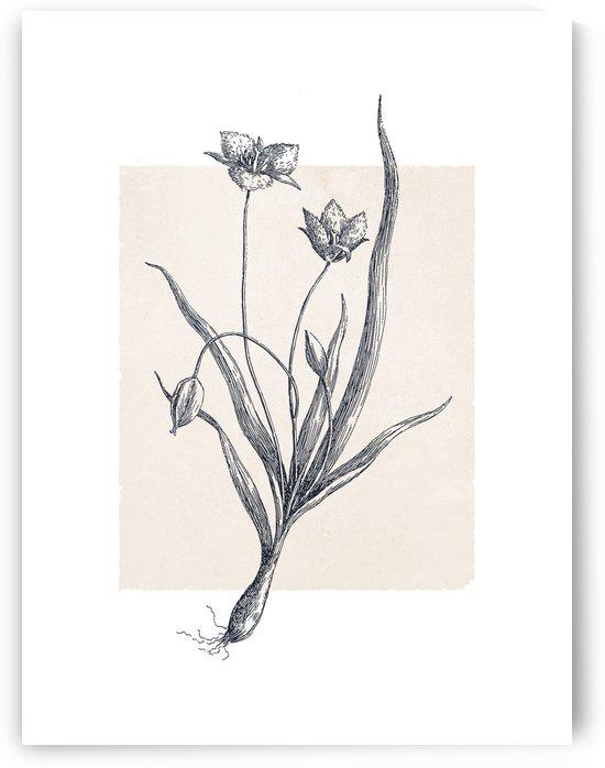 Botanical Sketch 03 by Apolo Prints