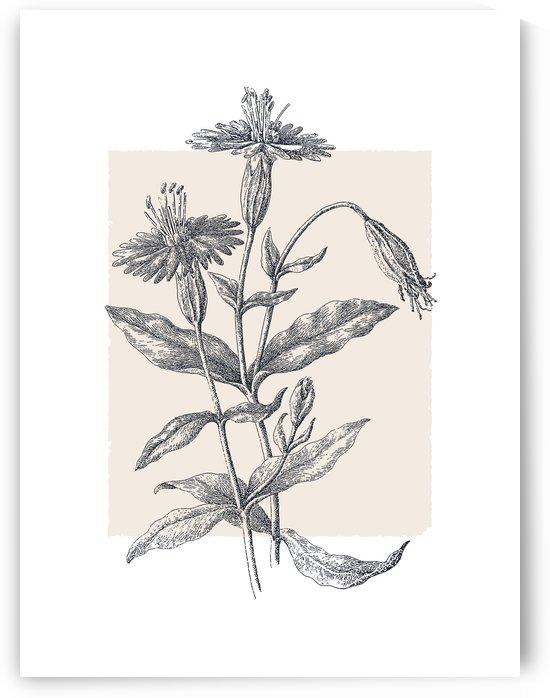 Botanical Sketch 05 by Apolo Prints