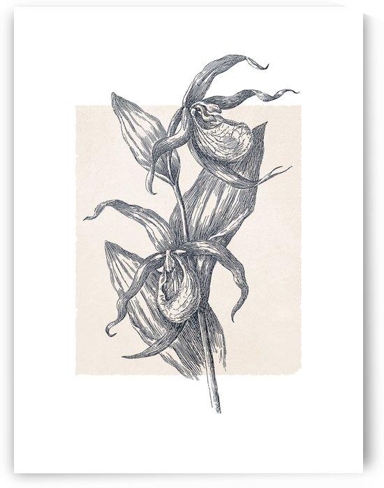 Botanical Sketch 02 by Apolo Prints