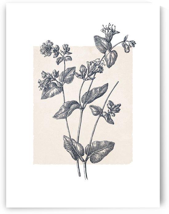Botanical Sketch 09 by Apolo Prints