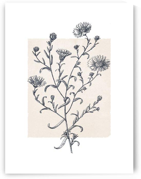 Botanical Sketch 10 by Apolo Prints
