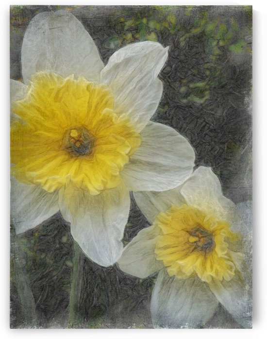 A Pair Of Daffy Dillies by Leslie Montgomery