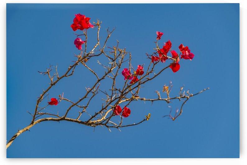 Santa Rita Flower Photo001 by Daniel Ferreia Leites Ciccarino