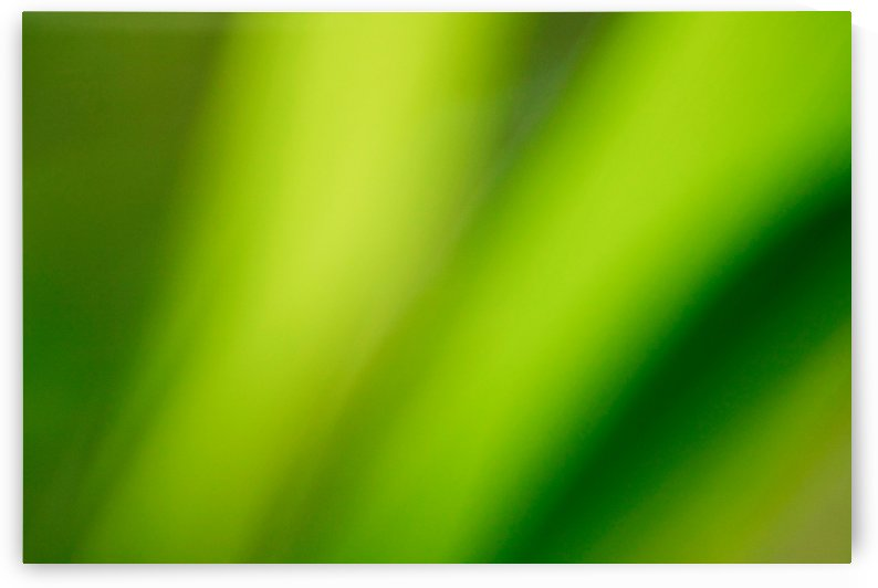 Peaceful and Soft Greens by Tammy Bicknell