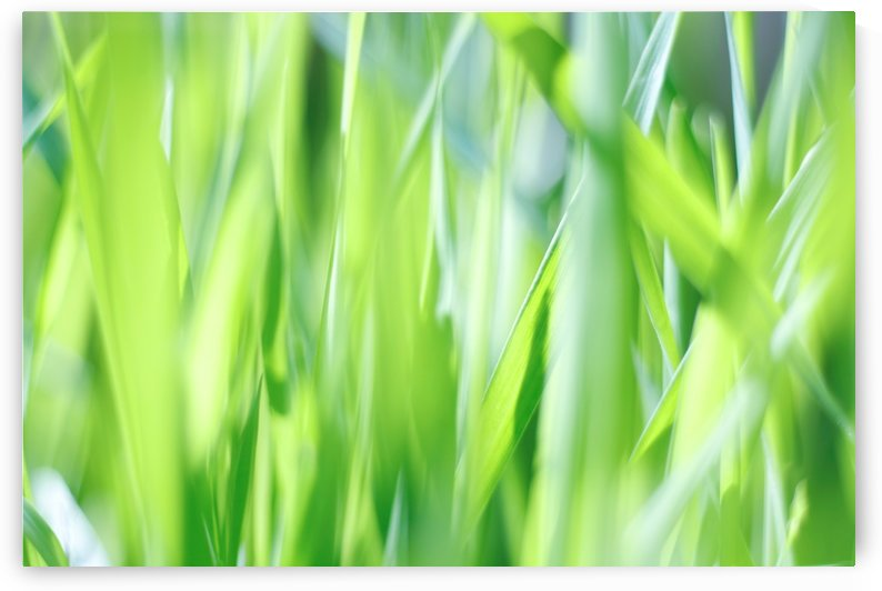 Blueish Green Grass by Tammy Bicknell