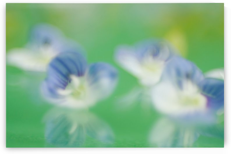 Tiny Flowers with Reflection by CreationLife Me