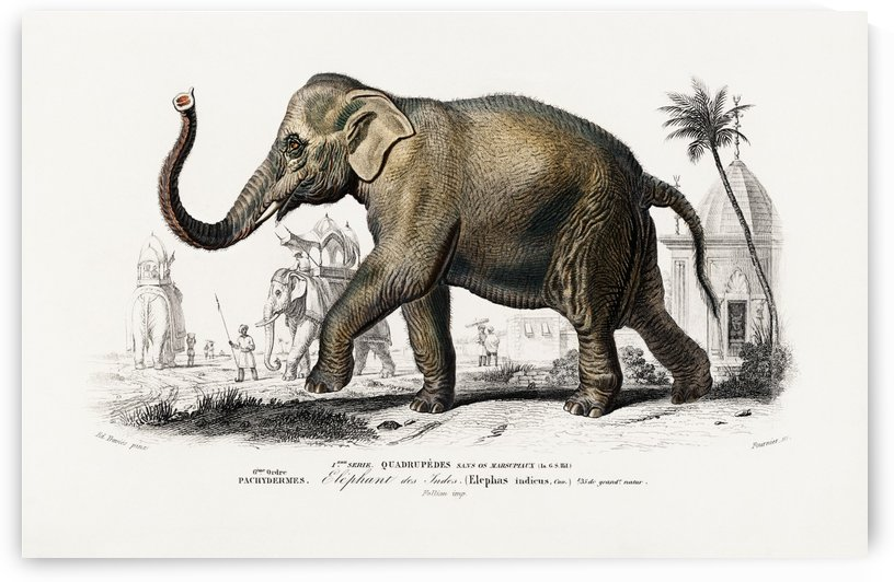 Elephas maximus by Four Beautiful Sunsets