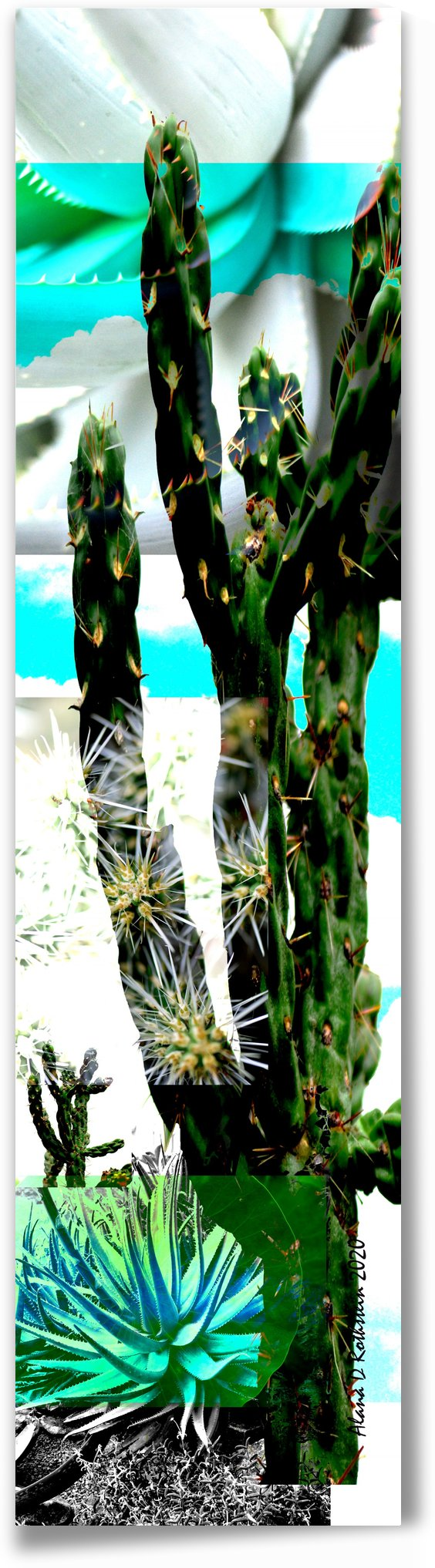 Cactus One by Alana Rothstein