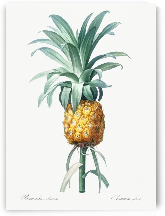 Pineapple Illustration 1805 by Four Beautiful Sunsets