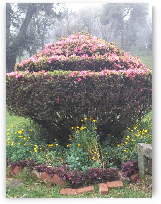 Floral Garden9 in Kodaikanal India by Sankar Srinivasan