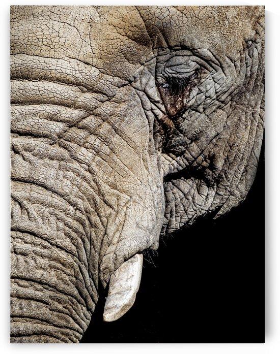 Elephant Close Up by David Yoon