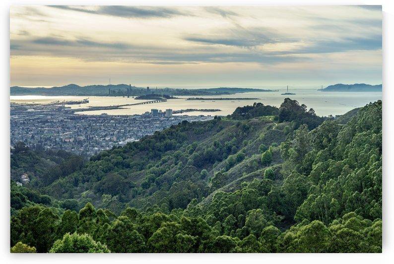 San Francisco Skyline From Berkeley  by David Yoon