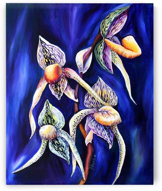 Lady Slipper Watercolor Painting by Nisuris Art