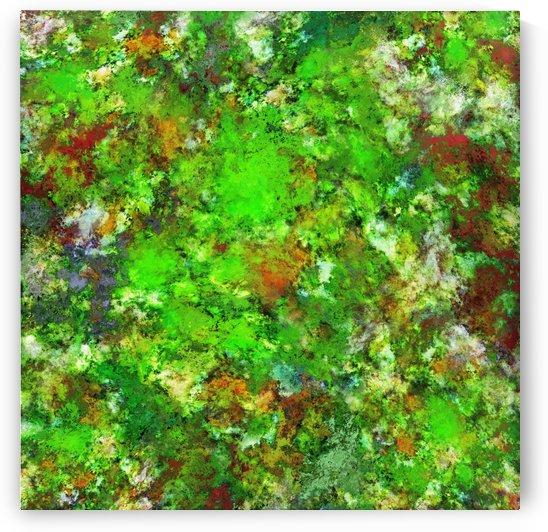 Slippery green rocks by Keith Mills