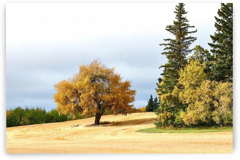Autumn.  by Vasyl