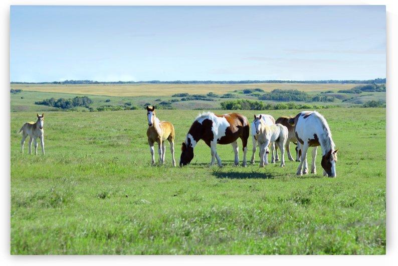 Horses . Summer. Early morning. by Vasyl