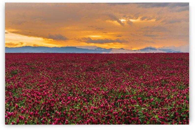 Crimson Tide by Steve Luther