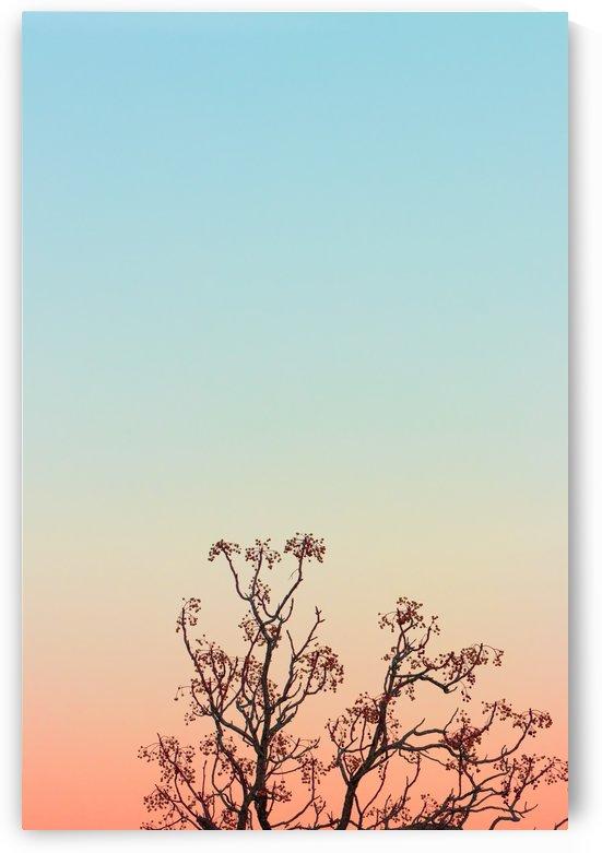 Tree Top by Joel Rodgers