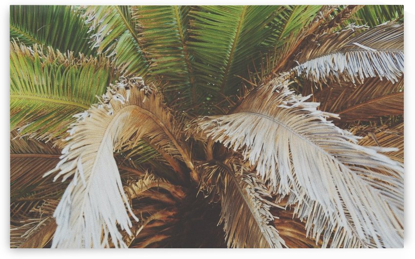 Palm Tree Natural Leaves by tiana anderson
