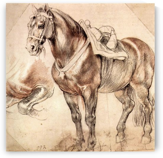 Horse studies by Rubens by Rubens
