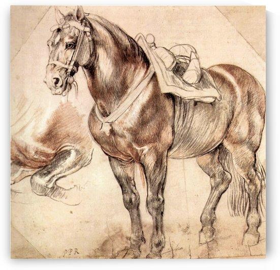 Horse studies by Rubens by Rubens