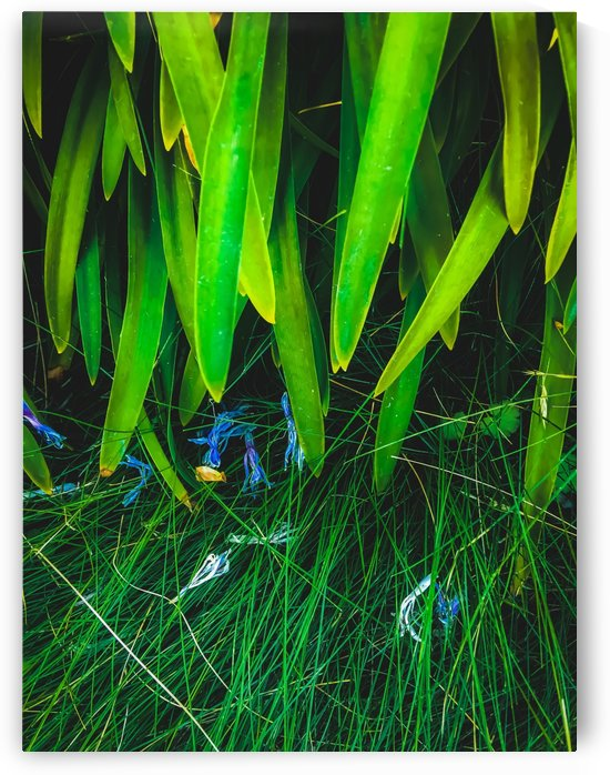 closeup green leaves plant with green grass by TimmyLA