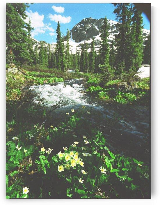 Rushing Mountain Stream by Steve Tohari
