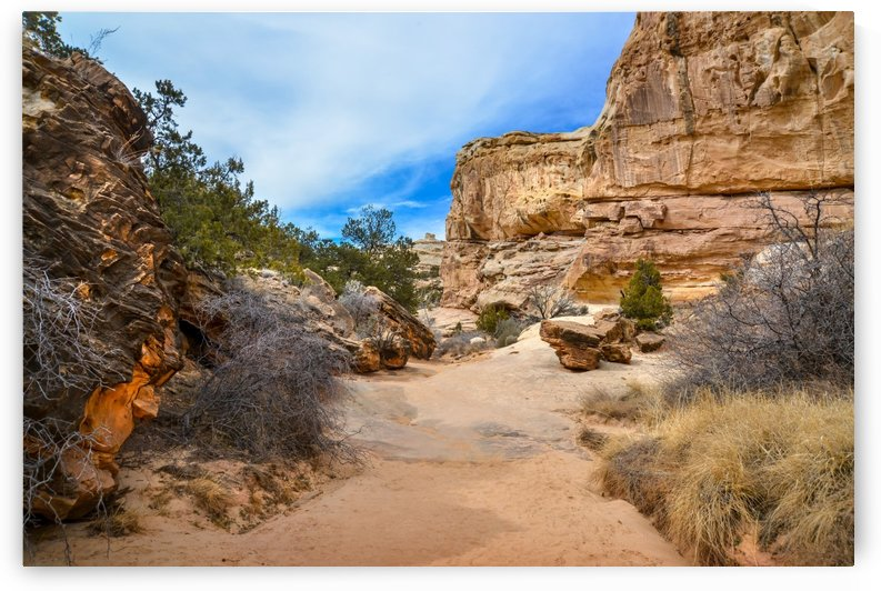trail walk in the Capitol reef National Park Utah USA by Francois Lariviere
