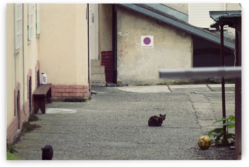 Cats by Alen Gurovic