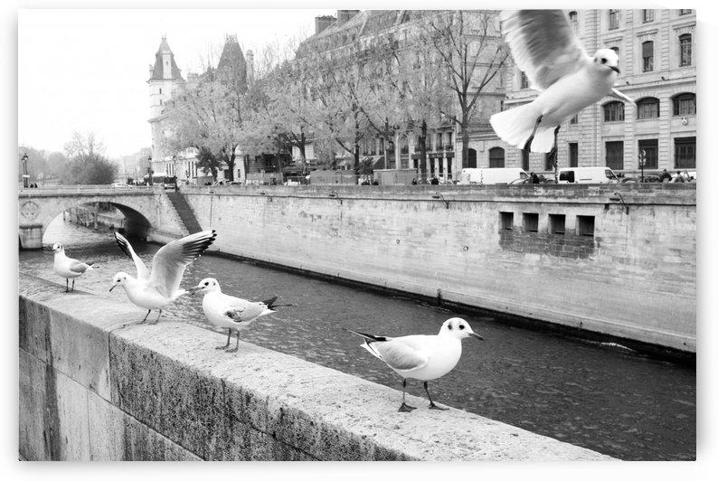 Les Oiseaux by Bill Osuch