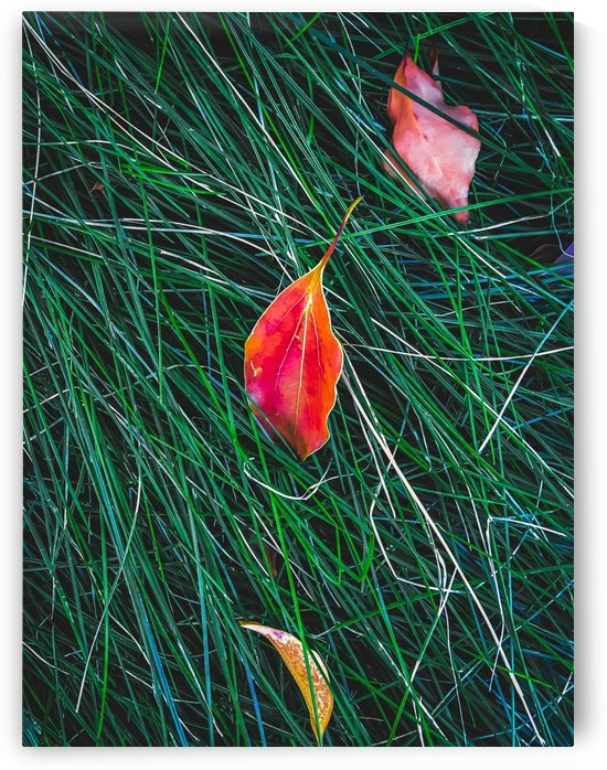 closeup orange leaves on the green grass field by TimmyLA