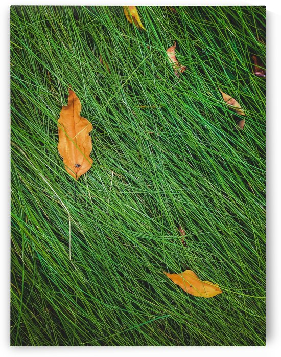green grass field background with dry brown leaves by TimmyLA