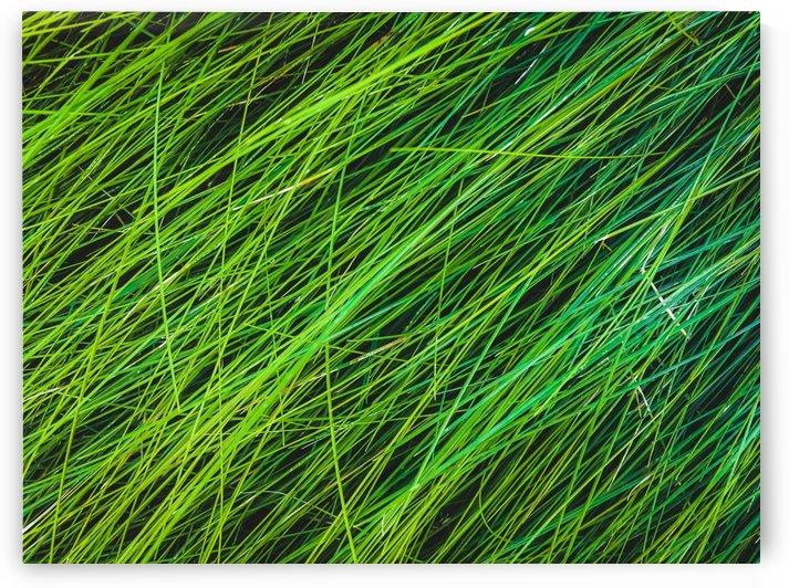 closeup green grass field texture background by TimmyLA