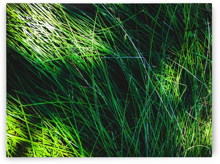 green grass field texture abstract background by TimmyLA