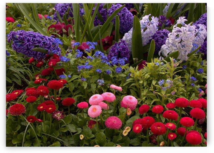 Spring Garden 8x10 by Bern E King Photography