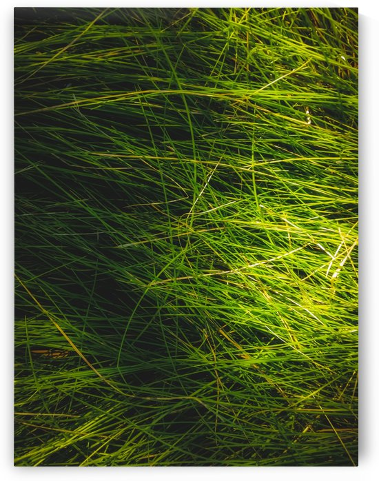 closeup green grass field texture abstract background by TimmyLA