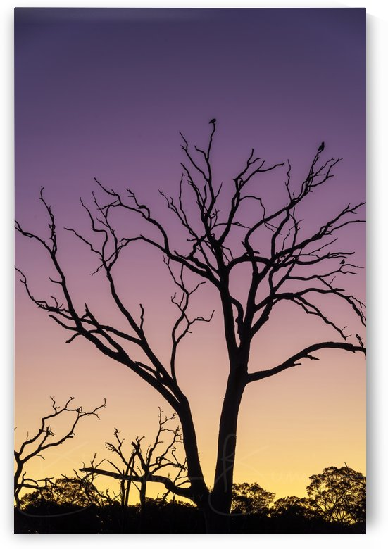 Sunset & the dead tree by BBCLICKZ - Bhaumik Bumia Photography