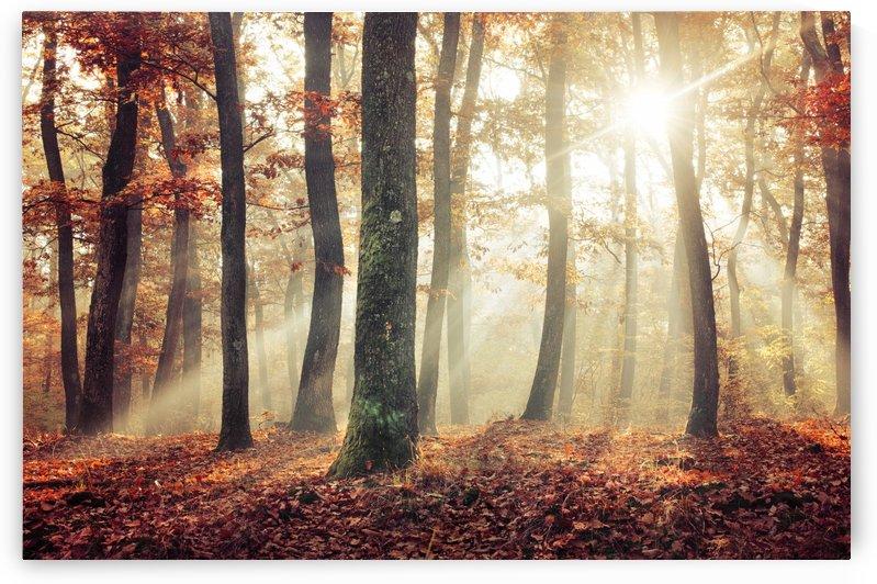 Autumn forest by Zsolt Zsigmond