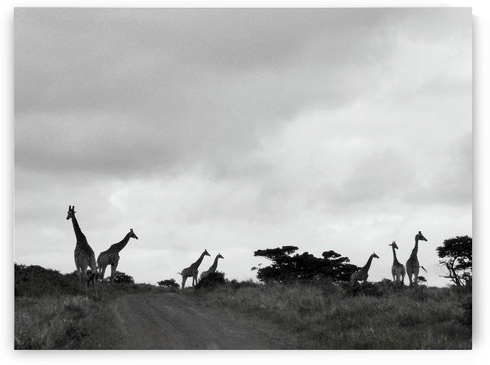 Tower of Giraffe by Lezandie de Beer