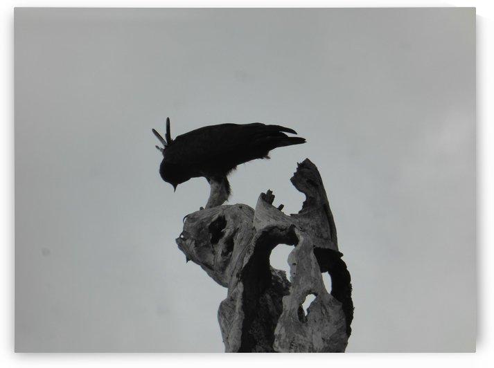 Solo  Bird by Lezandie de Beer